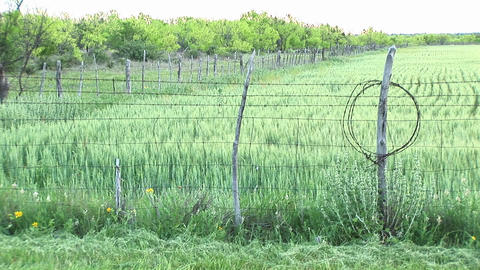Medium-shot of a crop fenced in on a Texas ranch Footage
