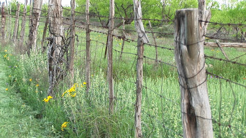 Medium-shot of a barbed-wire fence standing on a Texas ranch Stock Video Footage