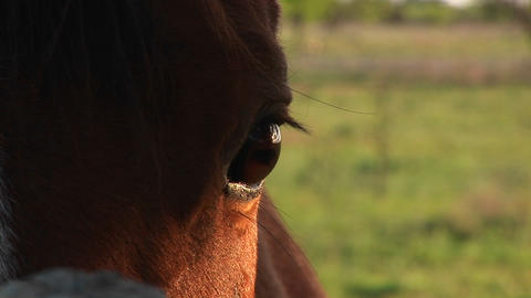 Close-up of a horse's blinking right eye Stock Video Footage