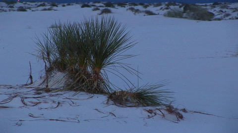 Medium-shot of terrain in the White Sands National Monument in New Mexico Live Action
