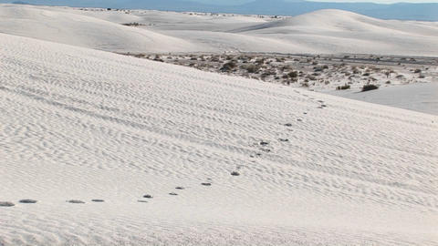 Pan-up of tracks in a sand dune at White Sands National Monument in New Mexico Footage