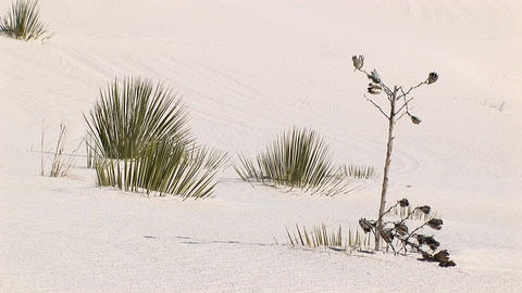 Medium shot of plants at White Sands National Monument in... Stock Video Footage