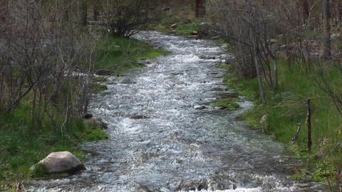 Pan-up of a flowing mountain stream Footage