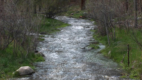 Pan-up of a flowing mountain stream Stock Video Footage