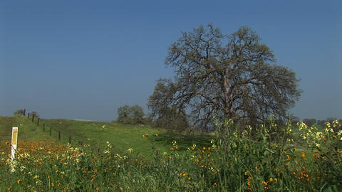 Medium shot of wildflowers blooming in a pasture in California Footage