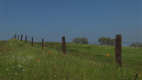 Medium shot of a fence line in a lush pasture in California Footage