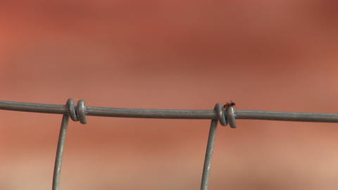 Close-up of an ant crawling on a wire fence Stock Video Footage