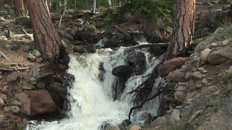 Medium shot of a mountain stream flowing through a forest Footage
