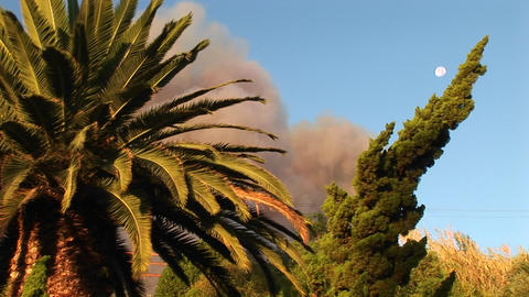 Close-up of trees in front of a billowing cloud of smoke... Stock Video Footage