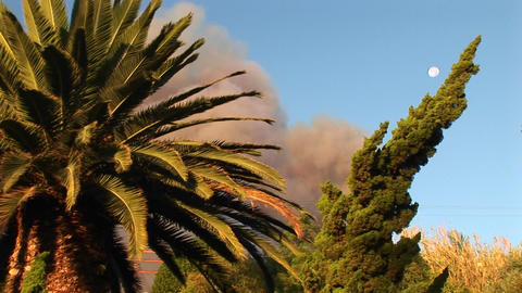 Close-up of trees in front of a billowing cloud of smoke from a wildfire in southern California Footage
