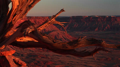 Medium-shot of a dead tree stump at Canyonlands National... Stock Video Footage
