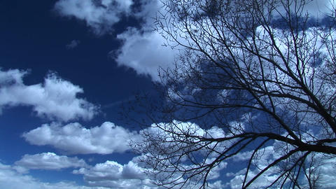 Medium shot of cloud-filled skies above a leafless tree... Stock Video Footage