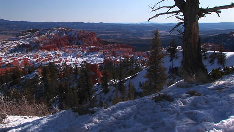 Medium-shot of pine trees and snow in Bryce Canyon... Stock Video Footage