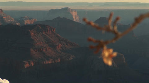 Wide shot of Grand Canyon National Park with selective focus on lone leaf dangling from tree branch Footage