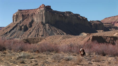 A cow grazes at the base of a Mesa in the desert Southwest Stock Video Footage