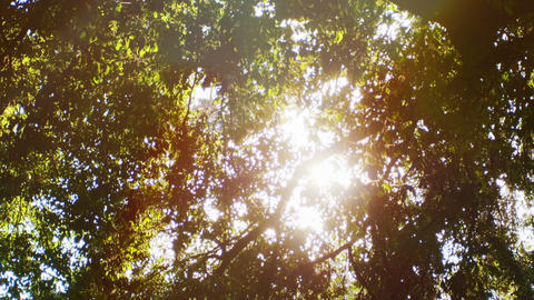 The morning sun shining through the leaves of the tree. 4k footage Footage
