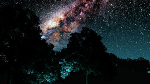 trees and Milky Way stars at night. Elements of this image furnished by NASA Animation