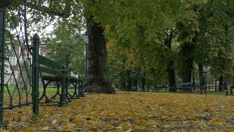 Autumn Raining in Park Footage