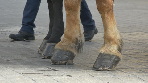 Horse Hooves on Pavement Footage