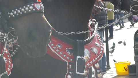 Horses Muzzles in Cold Day Live Action
