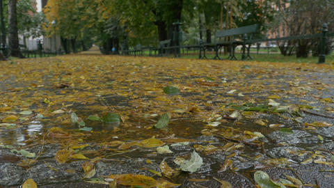 Leaves and Rain in the Park Footage