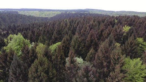 Spruce forest in verdun france from an aerial perspective Live Action