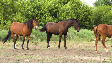 Young horses on stand on the farm. Horses stand next to each other Live Action