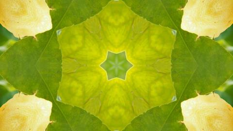 Kaleidoscope fruit vegetable 4k315 Footage