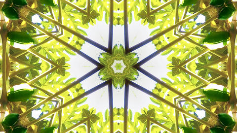 Kaleidoscope fruit vegetable 4k321 Footage