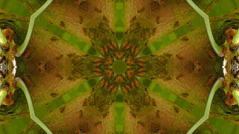 Kaleidoscope fruit vegetable 4k327 Footage