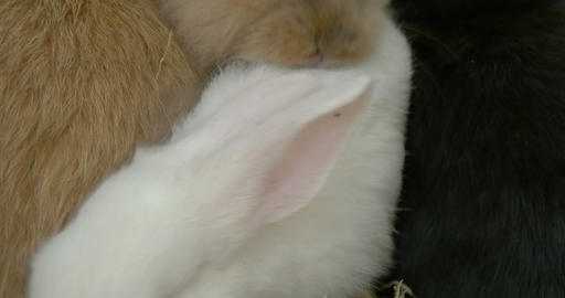 Baby Rabbit White Close Up Footage