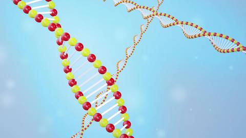 DNA image cg 003 Animation