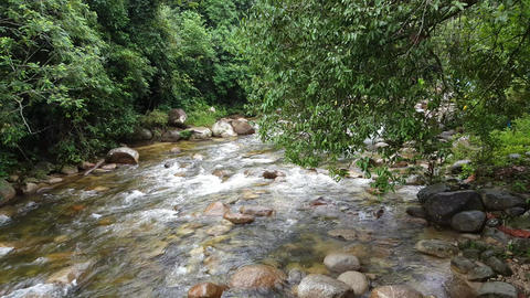 Fast flow water from upper stream to lower stream at Sungai Sedim, Kulim Live Action