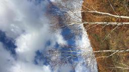 奥木曽湖の紅葉と白樺 ビデオ
