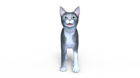 CAT Walk Animation