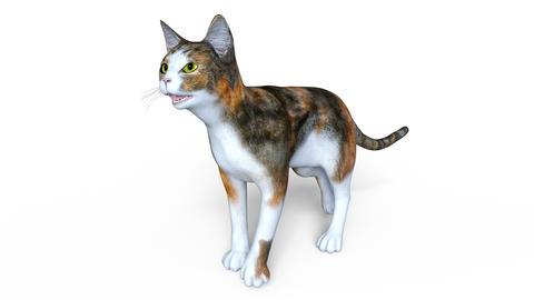 UHD CAT Walk Animation