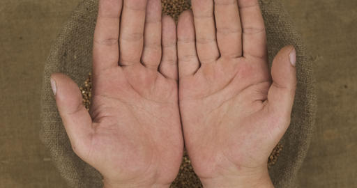 Falling buckwheat grains in human palms on the background of a sack with grain Live Action