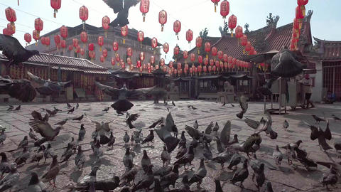 Pigeons fly freedom in front of temple with background of red lantern Live Action