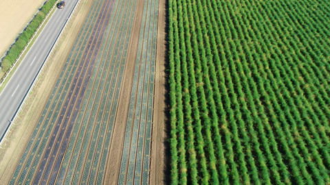 Agricultural field, plantation - aerial view Live Action