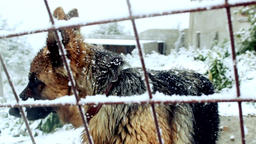 Cute Dog Barking In The Snow Footage