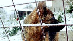 ANIMAL FOOTAGE 1