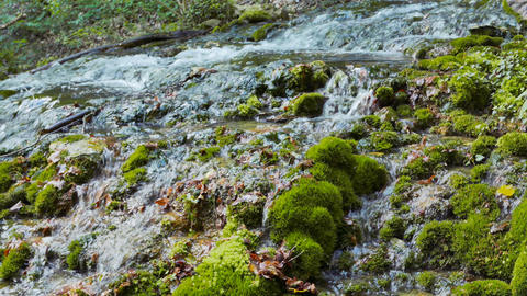 River in the moss. Soft focus. Sary-Uzen. Crimea Footage