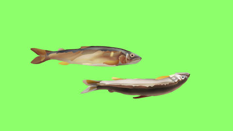 Bouncing sweetfish double Videos animados