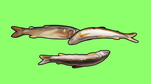 Bouncing sweetfish triple2 Videos animados
