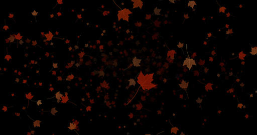 yellow, brown, red colorful leaves autumn colors falling down from top on black background, leaf Live Action