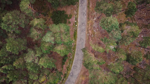 Pine forest from above, fall season, forest road Live Action