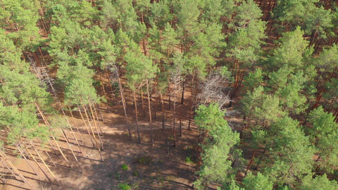 Pine Deforestation Aerial GIF