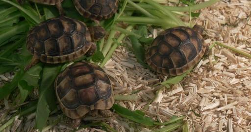 Little Tortoises Footage