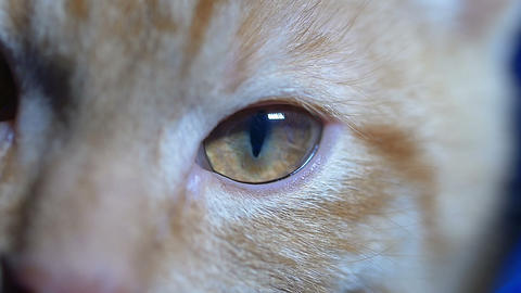 red cat's eyes (close up) Footage