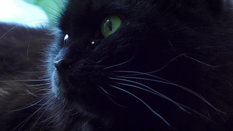 black cat with green eyes Footage